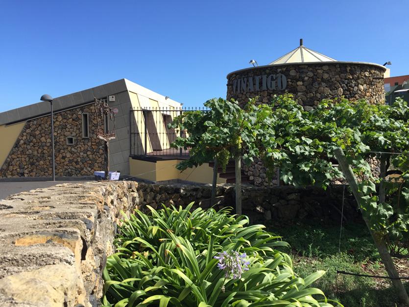 Tenerife vineyards near Abama: Vinatigo Bodega