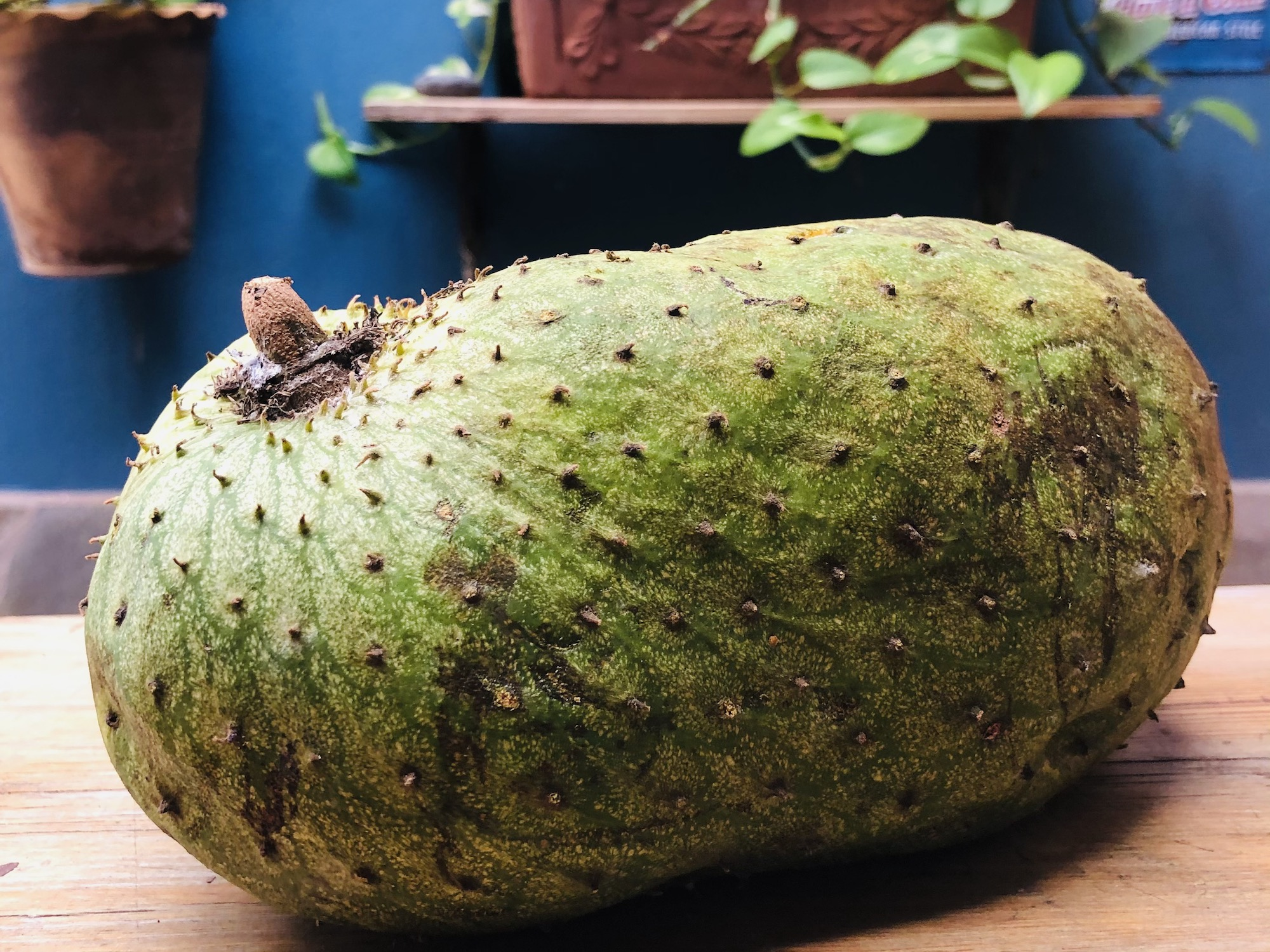 Tropical fruit: learn about (and try!) guanábana
